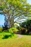 Un jardín tropical Jardín de Eden, Maui Hawaii Imagen de archivo libre de regalías