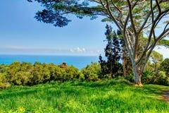 Un jardín tropical Jardín de Eden, Maui Hawaii Foto de archivo libre de regalías