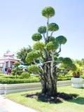 Un jardin. image stock