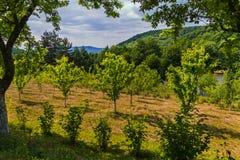 Un jardin avec de jeunes arbres fruitiers plantés dans même des rangées Élevage sur la berge dans un secteur pittoresque Images stock