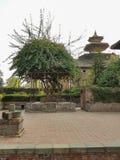 Un jardin avec des arbres et usine au Népal photographie stock libre de droits