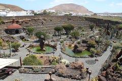 Un jardin avec des cactus Photo stock