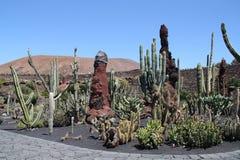 Un jardin avec des cactus Image libre de droits