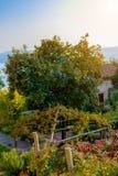 Un jardin confortable avec l'élevage d'arbres de mandarine Image libre de droits