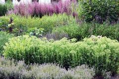 Un jardin de fines herbes riche avec des pluriannuels Photographie stock libre de droits
