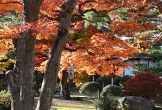 Un jardin japonais en automne photo libre de droits
