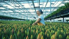Un jardinero recoge tulipanes amarillos en un cubo, comprob?ndolos almacen de metraje de vídeo