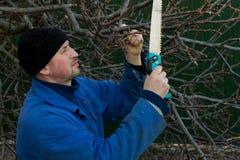 Un jardinier est prêt a vu outre d'une branche d'arbre photos libres de droits