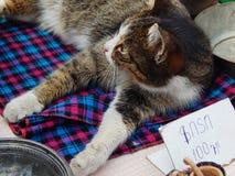 Un jefe del gato atigrado de un mercado de pulgas Imagen de archivo