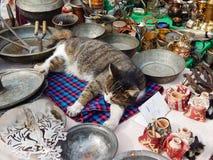 Un jefe del gato atigrado de un mercado de pulgas Imagen de archivo libre de regalías