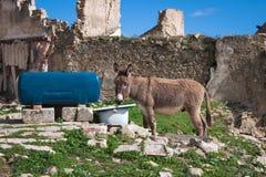 Un jeune âne à un endroit d'arrosage de basse-cour images stock