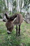 Un jeune âne dans une clairière dans la campagne image libre de droits