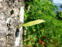 Un jeune arbre sur une écorce d'un arbre Image stock
