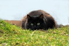 Un jeune chat photographie stock libre de droits