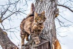 Un jeune chat rayé montant un tree_ photographie stock