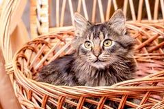 Un jeune chat rayé se repose dans un panier et regarde soigneusement  images stock