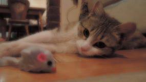 Un jeune chat regardant une souris image libre de droits