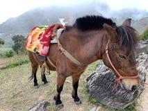 Un jeune cheval fort sur la montagne photo libre de droits