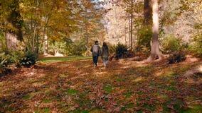 Un jeune couple heureux dans l'amour marchant par une belle forêt d'automne tenant des mains banque de vidéos