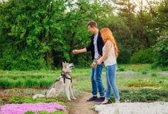 Un jeune couple marchant un chien en parc Photographie stock