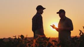 Un jeune et plus âgé agriculteur causant sur le champ au coucher du soleil photo stock