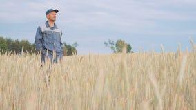 Un jeune exploitant agricole vérifie les usines dans un domaine de seigle 4K clips vidéos
