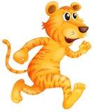 Un jeune fonctionnement de tigre Image libre de droits