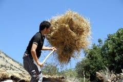 Un jeune garçon travaillant dur Image libre de droits