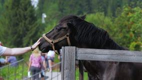 Un jeune homme frottant un cheval à une foire de ferme ou de village clips vidéos