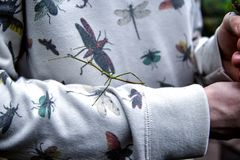 Un jeune homme habill? dans un chandail avec une image des insectes tient dans des ses mains un scarab?e d'observateur images stock