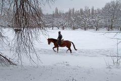 Un jeune homme montant un cheval sur un parc couvert de neige À cheval débarrassé Image stock