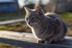 Un jeune, mignon chat se repose sur un banc en bois et examine attentivement la distance photographie stock