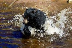 Un jeune ours noir 5 photographie stock libre de droits