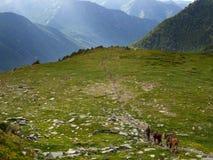 Un jinete con tres caballos camina a lo largo de la trayectoria a las montañas imagenes de archivo