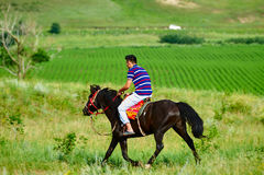 Un jinete en el prado Foto de archivo libre de regalías