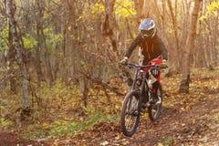 Un jinete joven que conduce una bici de montaña monta a la velocidad cuesta abajo en el bosque del otoño Foto de archivo libre de regalías
