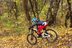 Un jinete joven que conduce una bici de montaña monta a la velocidad cuesta abajo en el bosque del otoño Fotos de archivo