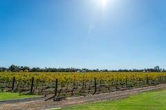 Un jour à l'établissement vinicole Photo libre de droits