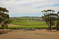 Un jour d'été à une vigne dans McLaren Vale Image libre de droits
