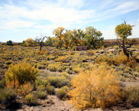 Un jour d'automne sur le désert photographie stock