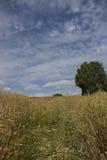 Un jour ensoleillé avec un ciel bleu et un blanc gonflé opacifie un chemin de camomille dans un pré d'or image libre de droits