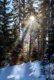 Un jour ensoleillé dans la forêt d'hiver image stock