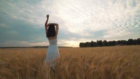 Un jour ensoleillé, une femme marche le long d'un champ de blé avec une robe blanche sur un mode de vie de concept de fond de nat banque de vidéos