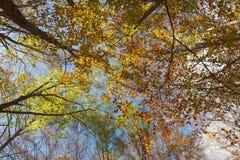 Un jour lumineux et paisible dans le bois Photographie stock libre de droits