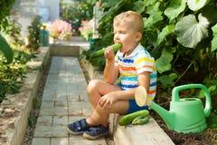 Un joyeux garçon bronzé, un homme blond recueille et mange les concombres verts Photo stock
