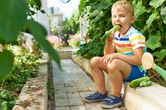 Un joyeux garçon bronzé, un homme blond recueille et mange les concombres verts Photographie stock