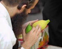 Un judío ortodoxo escoge la fruta cítrica antes del Sukkot Fotos de archivo