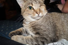 Un Kitty observé, signalent OP Photos stock