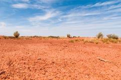 Un lézard en Arizona photos libres de droits