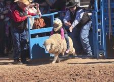 Un La Fiesta De Los Vaqueros Junior Rodeo foto de archivo libre de regalías